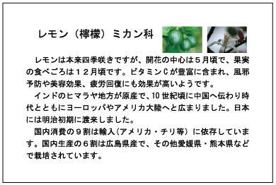 制作例植樹に使用する樹木名札レモン